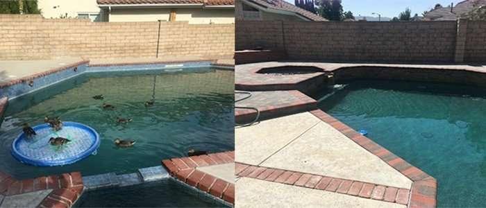 Pool & Spa Remodel